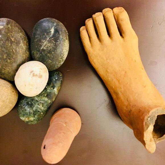 9. Le offerte anatomiche